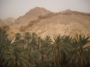 raid 2cv en Tunisie, oasis chebika